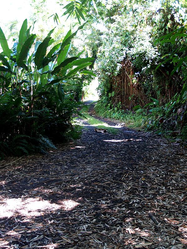 Mystery Avo - driveway