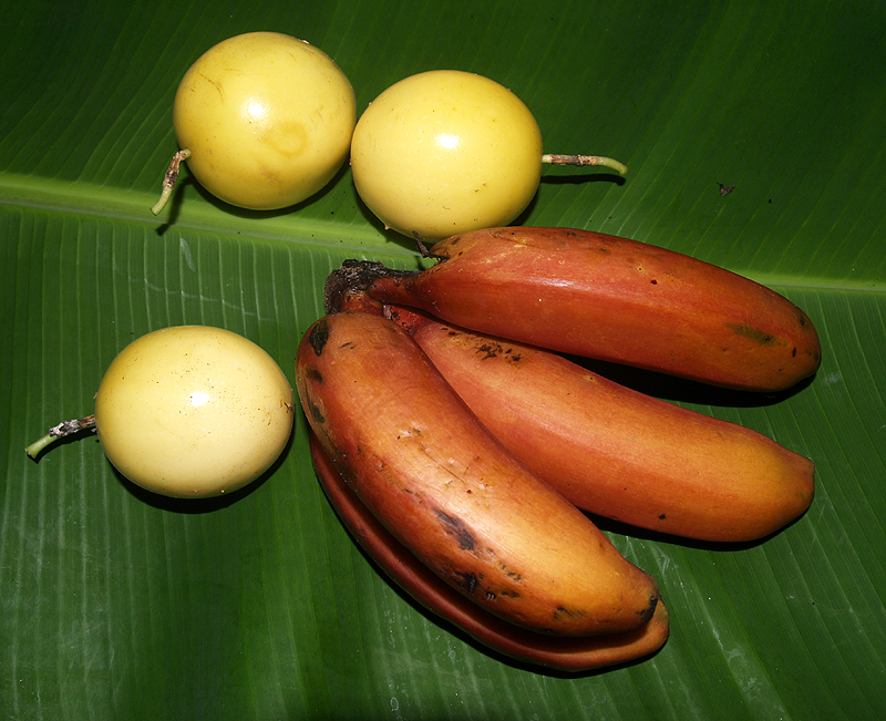 Cuban Red bananas & Liliko'i