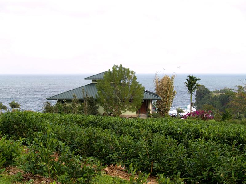 Onomea Tea - 4 - above house sm