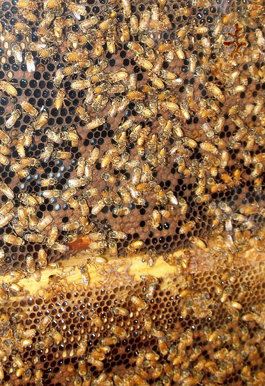 Hamakua Alive - Bee hive - sm