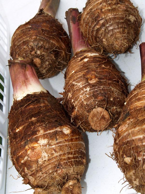 Kinoole Farmers Market - Hawaiian Taro