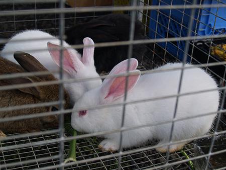 Hilo Coffee Mill - FM - rabbits