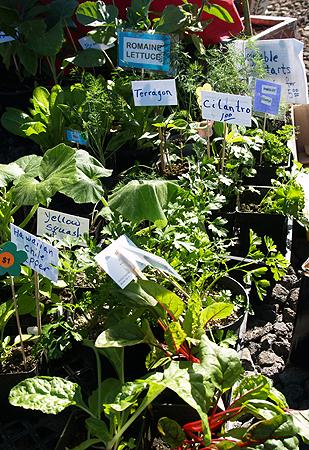 Hilo Coffee Mill - FM - Moongarden Farm - veggie & herbs