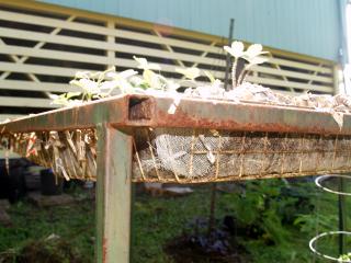 Garden 2010 - basket planter fits inside table frame 2
