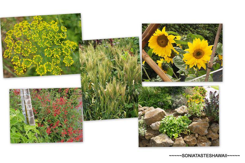 Mala'ai Garden3