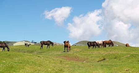 Kahua Ranch - Horses at pasture sm