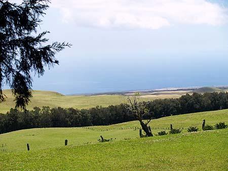 Kahua Ranch - Peaceful pastures