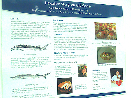 Taste of Hilo - Sturgeon poster