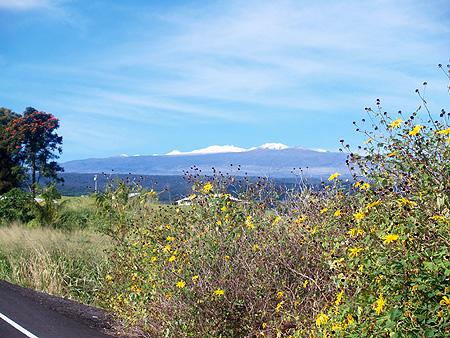 Mauna Kea - Snow - Snow & Sunflowers 1 sm
