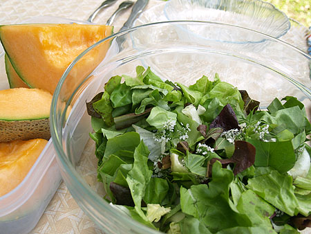 Picnic at the zoo - green salad and cantaloupe