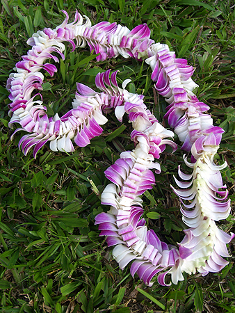 BDay - Butterfly Orchid lei