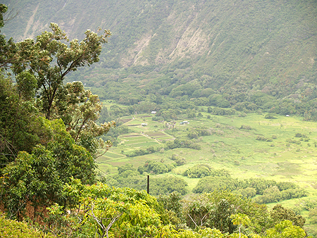 BDay - Waipio Rim Tour - taro farms in the valley