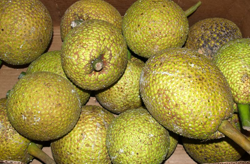 Breadfruit - asst on table