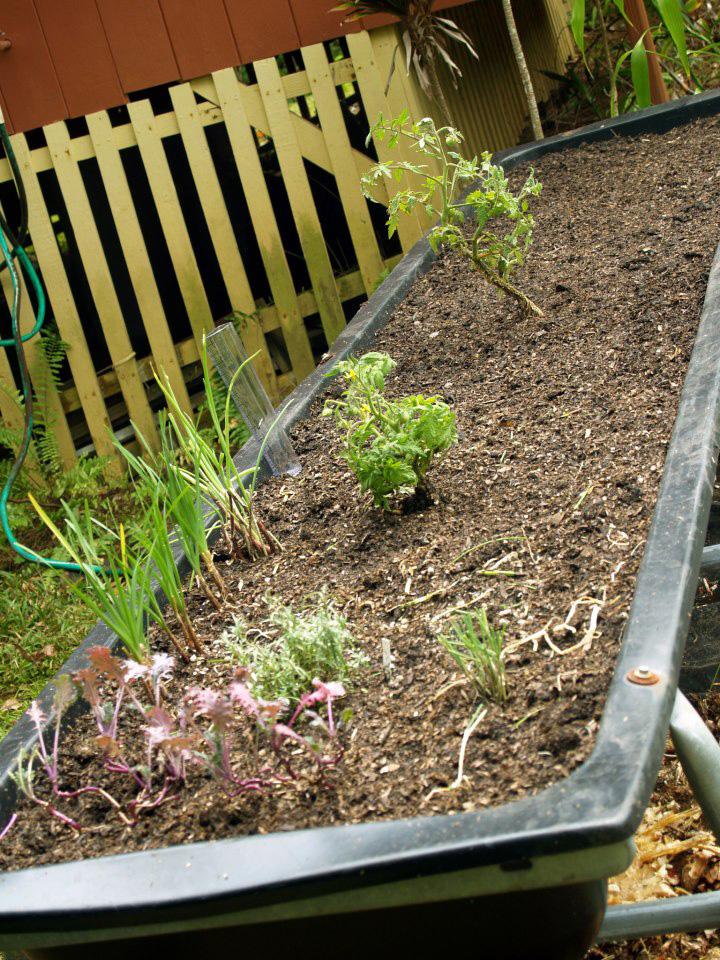 Pig trough planter