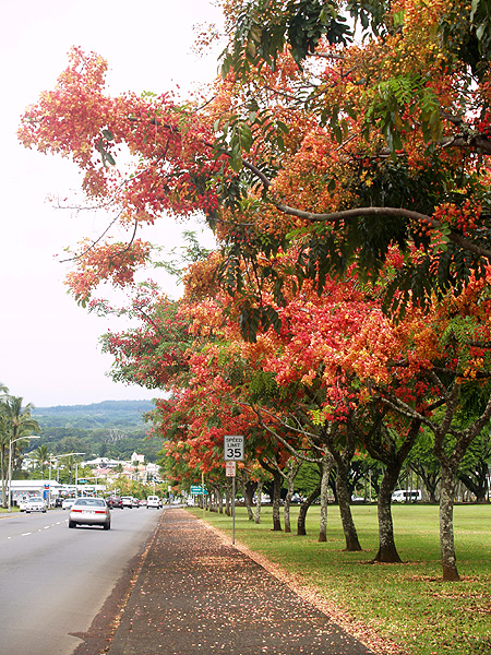 Hilo ablaze - panoramic sidewalk 2 sm