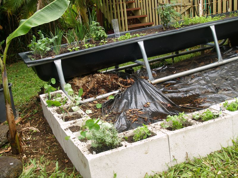 Pig trough planting area 5 - w blocks planted