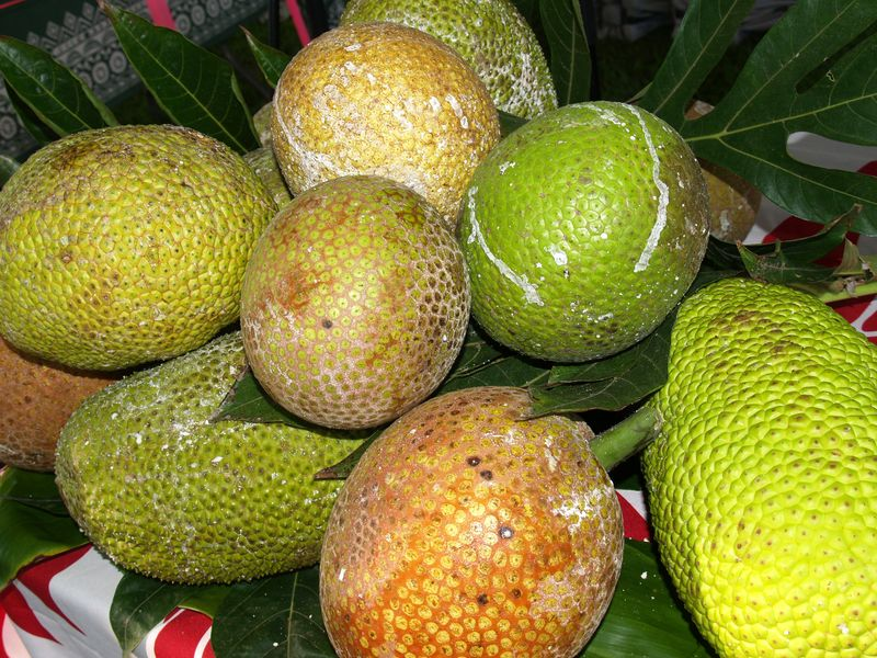 Breadfruit 2012 - Asst varieties breadfruit