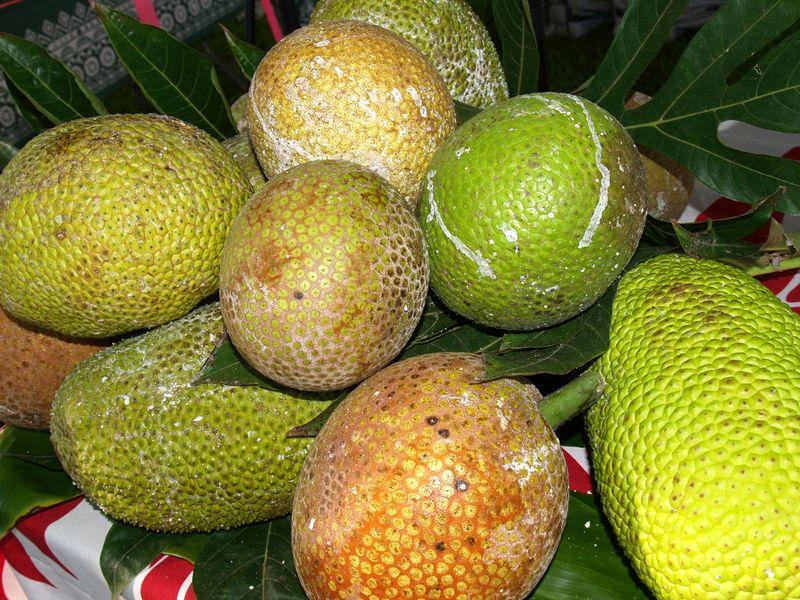 Breadfruit 2012 - Asst varieties breadfruit