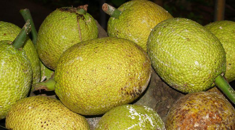 Breadfruit - asst on table 2