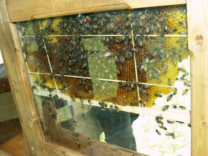 Hamakua Alive -  Bees
