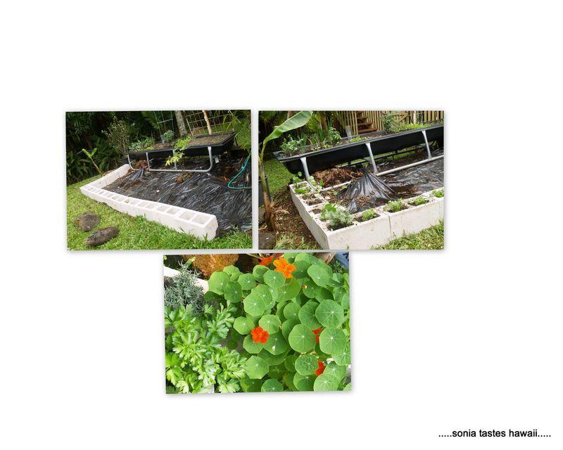 Garden 20133