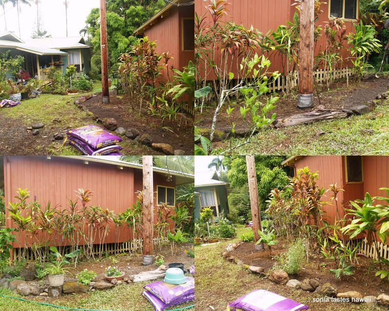 Garden 20135