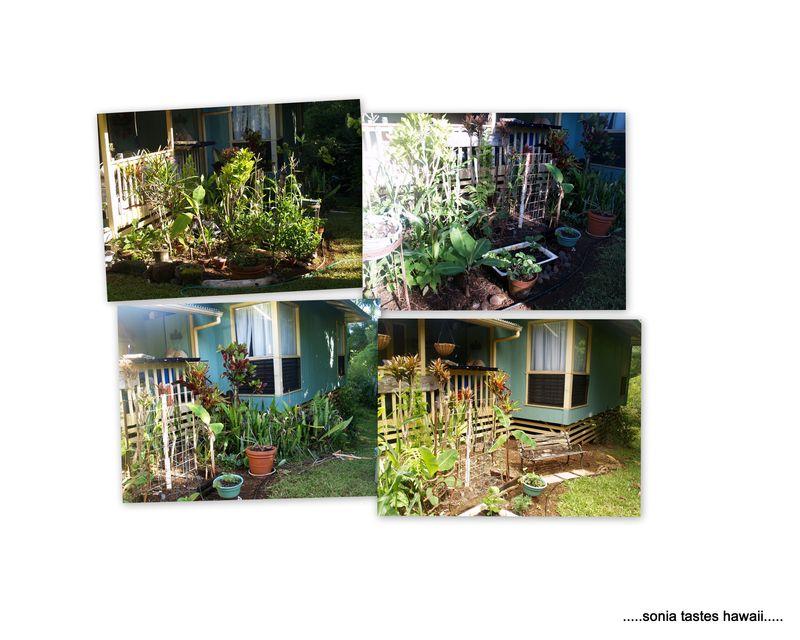 Garden 20131