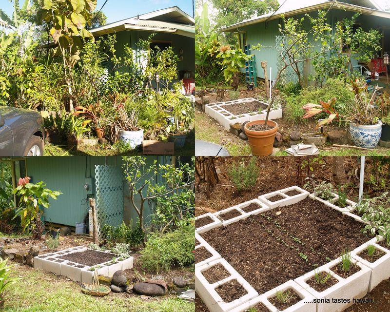 Garden 20134
