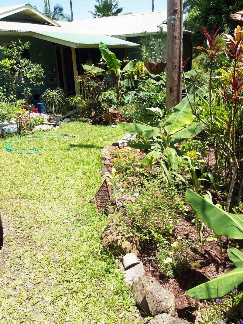 Garden - July - behind cabin towards house