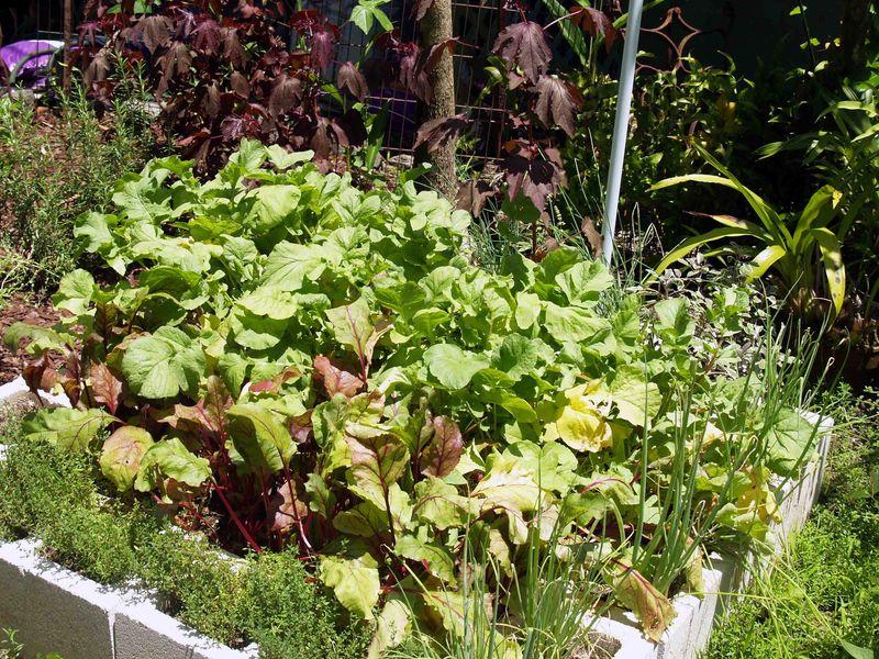 Garden - July - kitchen side bed