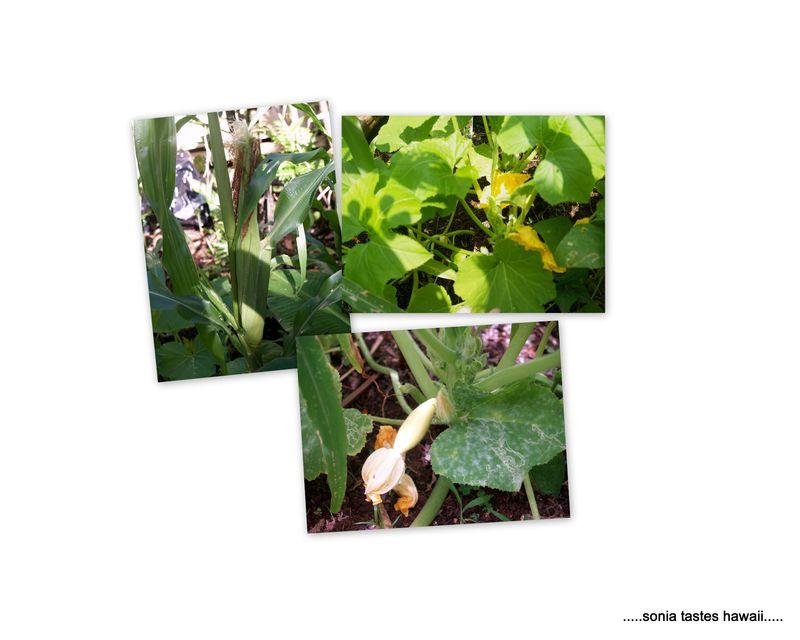 Garden 20132