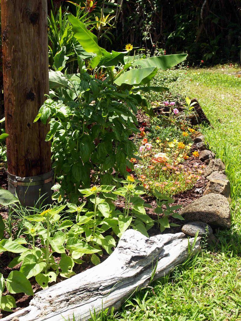 Garden - July - behind cabin towards driveway