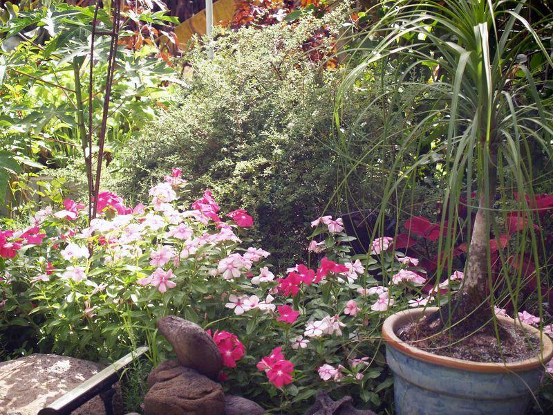 Garden - Vincas -