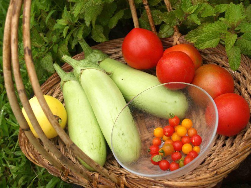 Garden - today's harvest - 7-26-13 - 2