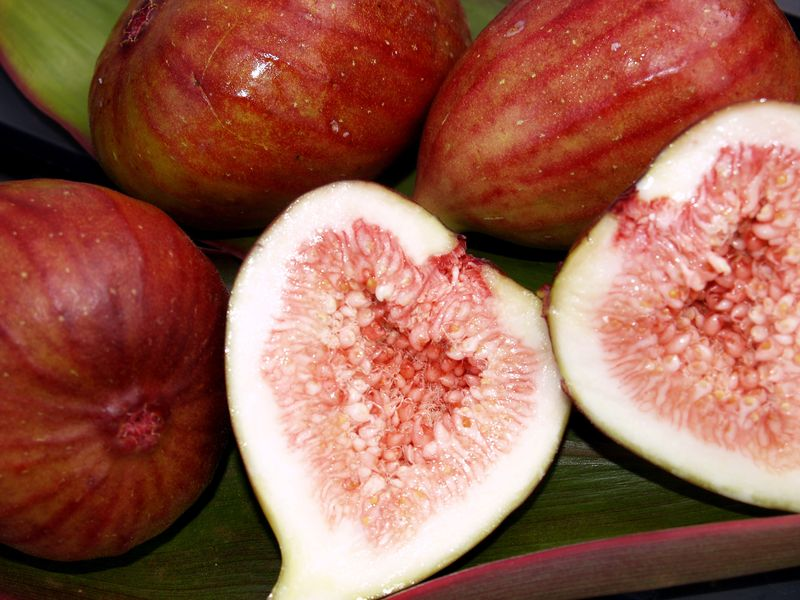 Kadota or Trojano figs