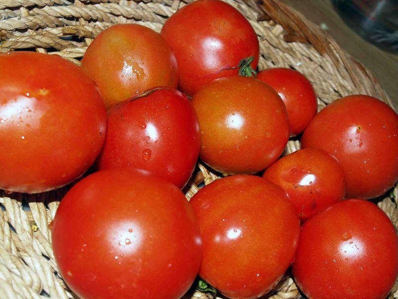 Garden - July - Tomato crop