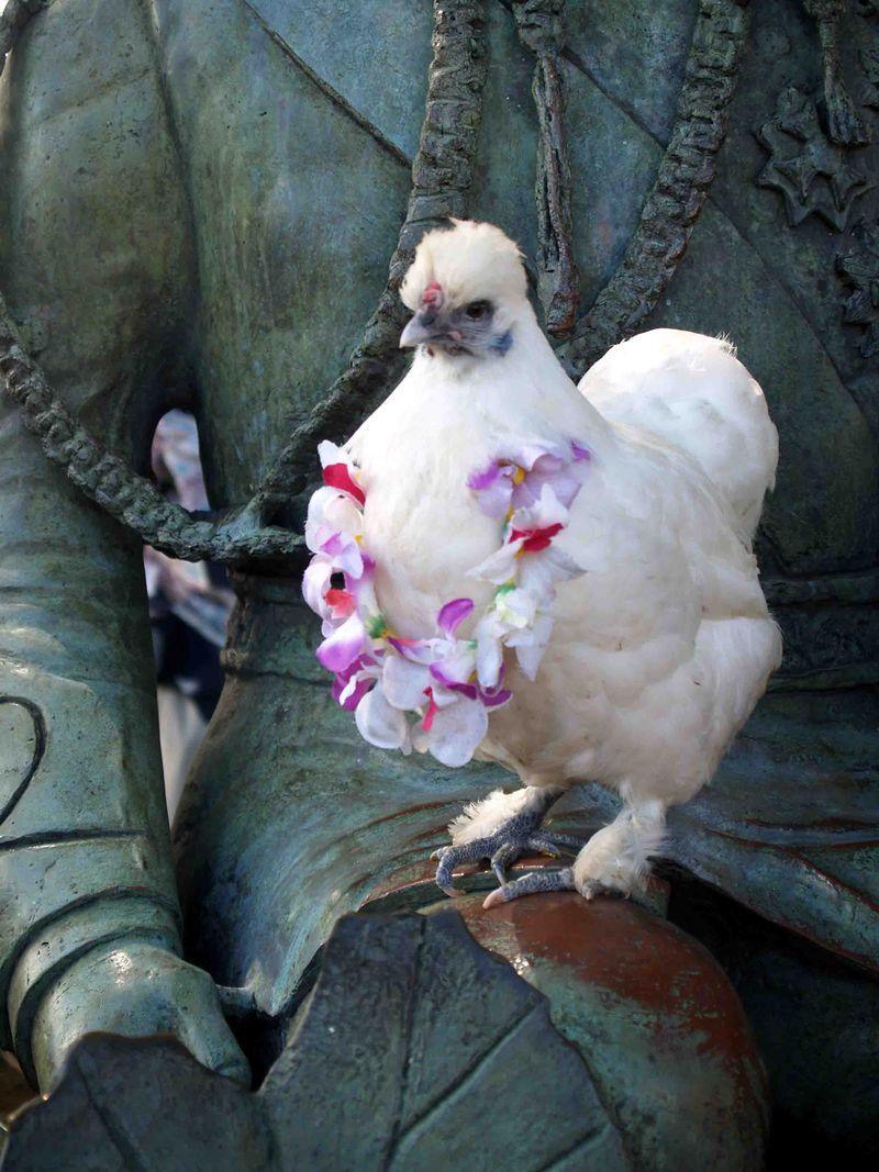 CNY 2014 - Keiki feeding chickens 2