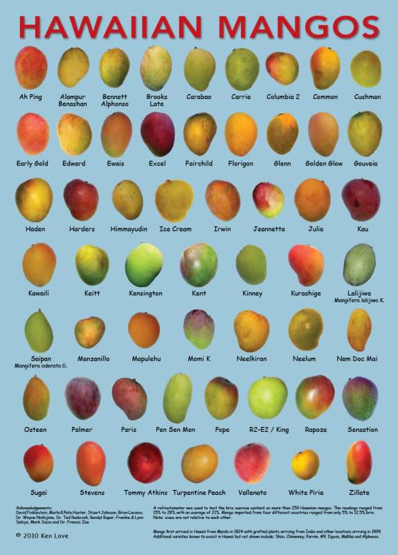 Poster - BI Mango