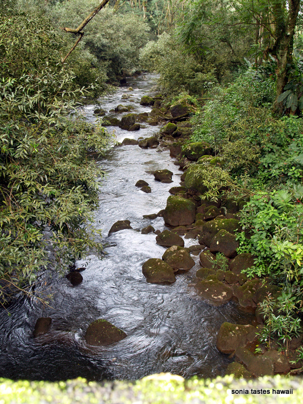 Kolekole Stream - north view