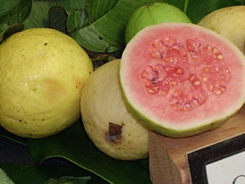 Making guava shells in syrup