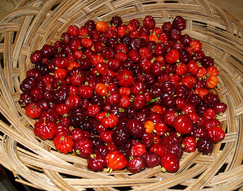 Basket Surinam Cherries - 2