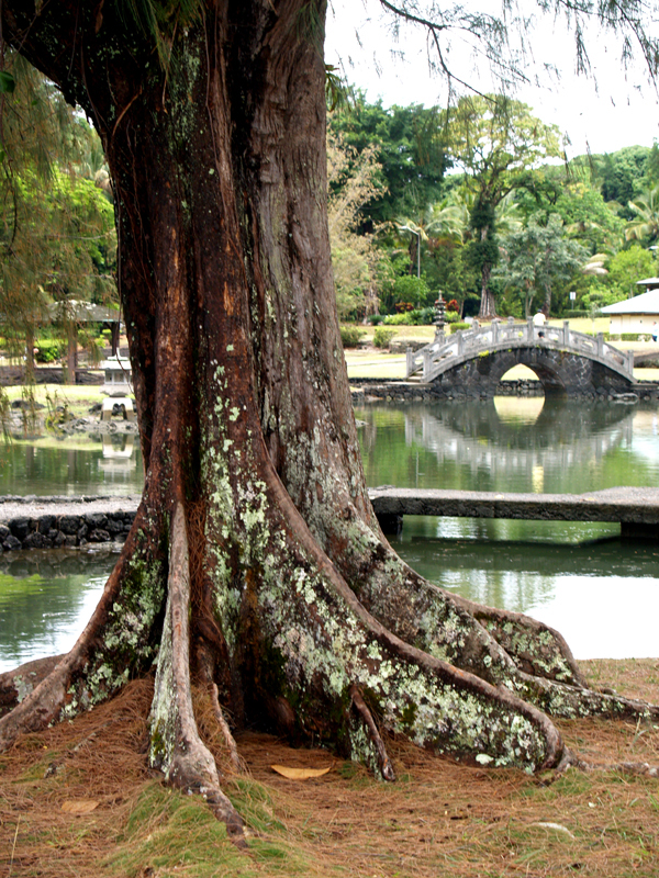 Liliuokalani Gardens - Ironwood and bridge
