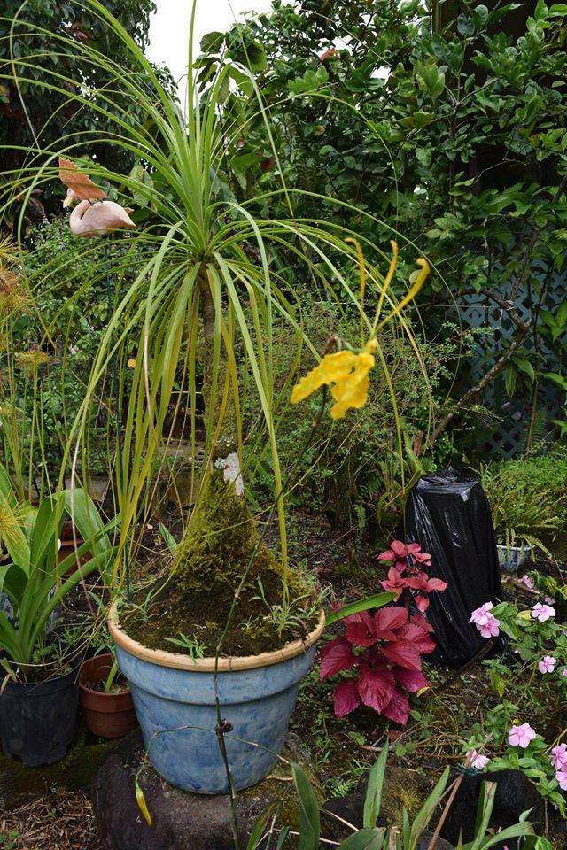 Garden - Orchid - Linda Kane