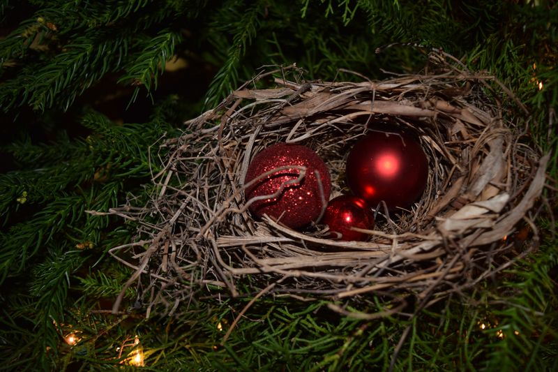 XMAS 14 tree nest 2