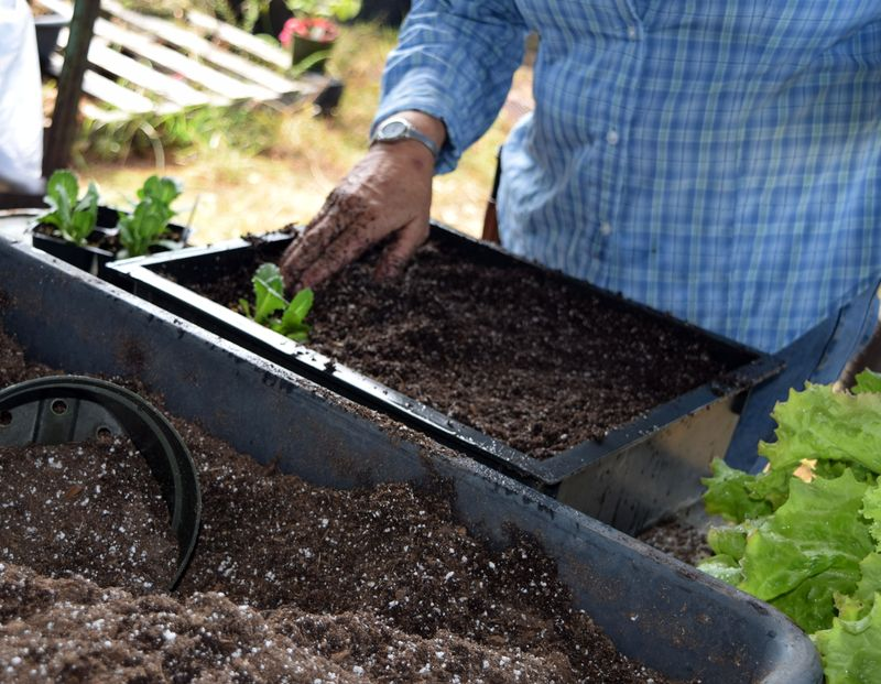 Gardening - planting 1