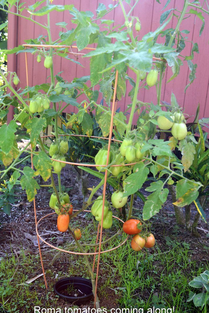 Garden - Romas