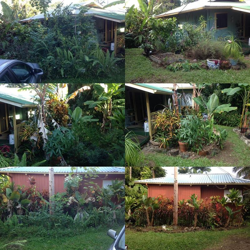 Garden - 2014 - collage before and after