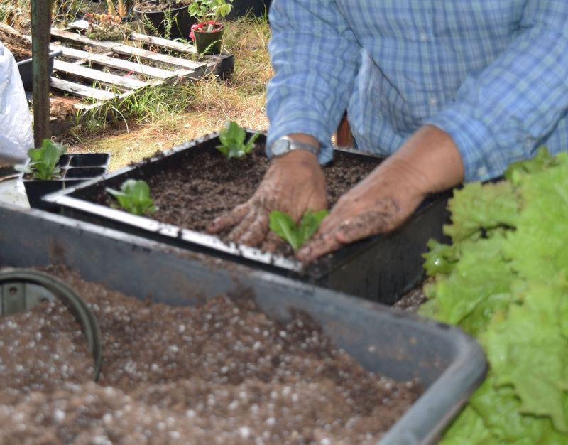 Gardening - planting 4