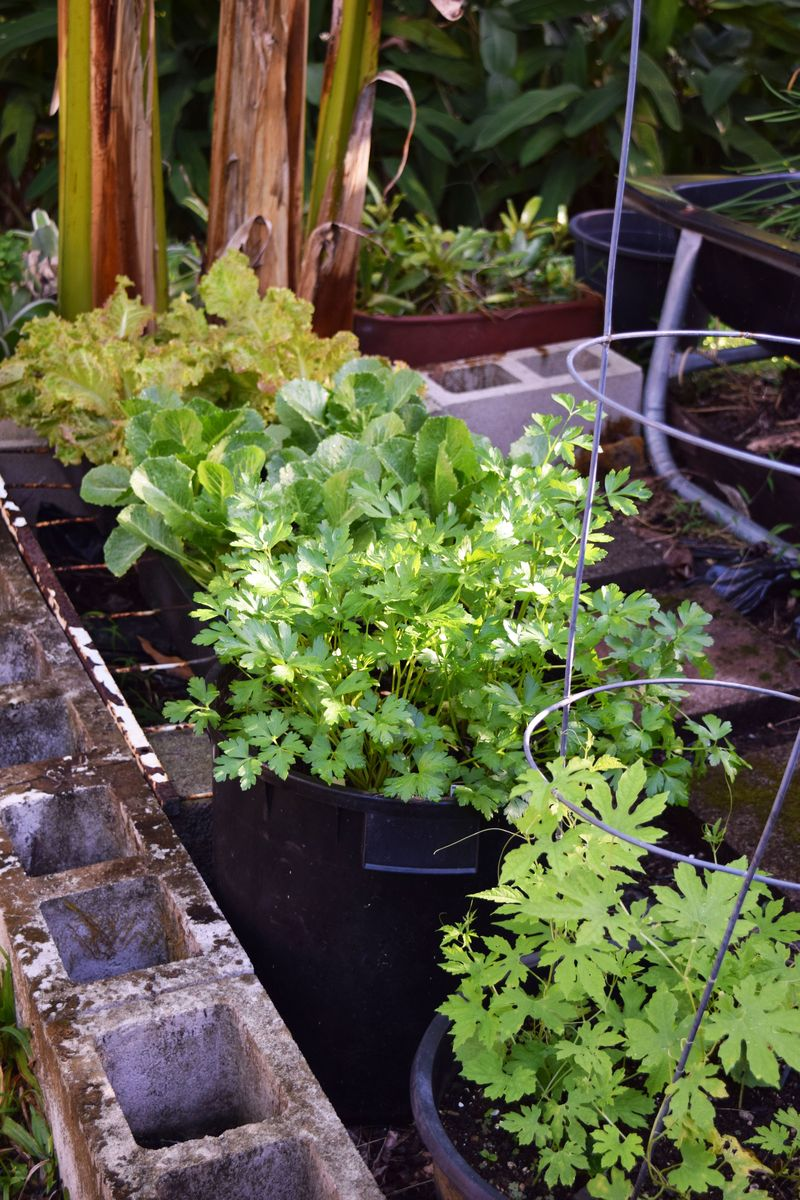 Garden 3-1-15 - Pots inside trough garden sm