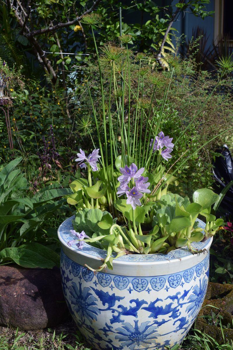GARDEN - Jardiniere 3 blooms sm